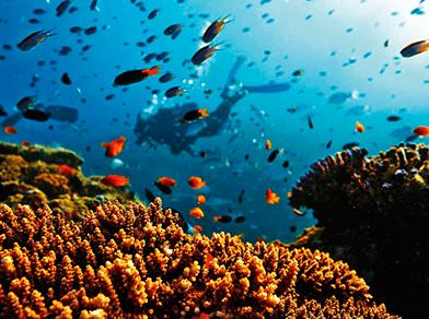 Preservação de Corais