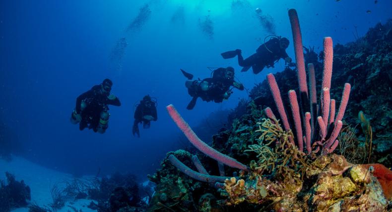 Viagem de mergulho em Bonaire