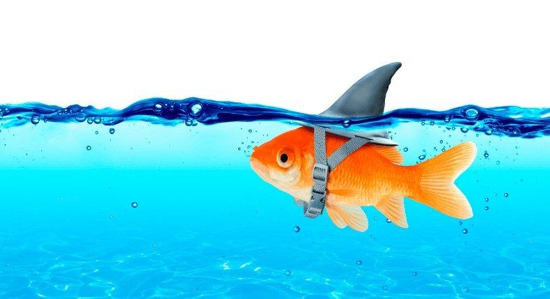 Importância dos tubarões